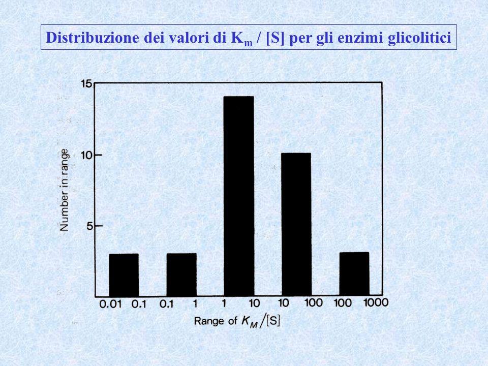 Distribuzione dei valori di Km / [S] per gli enzimi glicolitici
